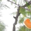 闲橙agui
