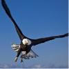 蓝天上的鹰