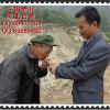 中国老山垮土古树