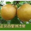 百里洲砂梨