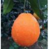 小于精品水果