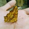 掌心的蝴蝶
