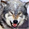狼�fqs